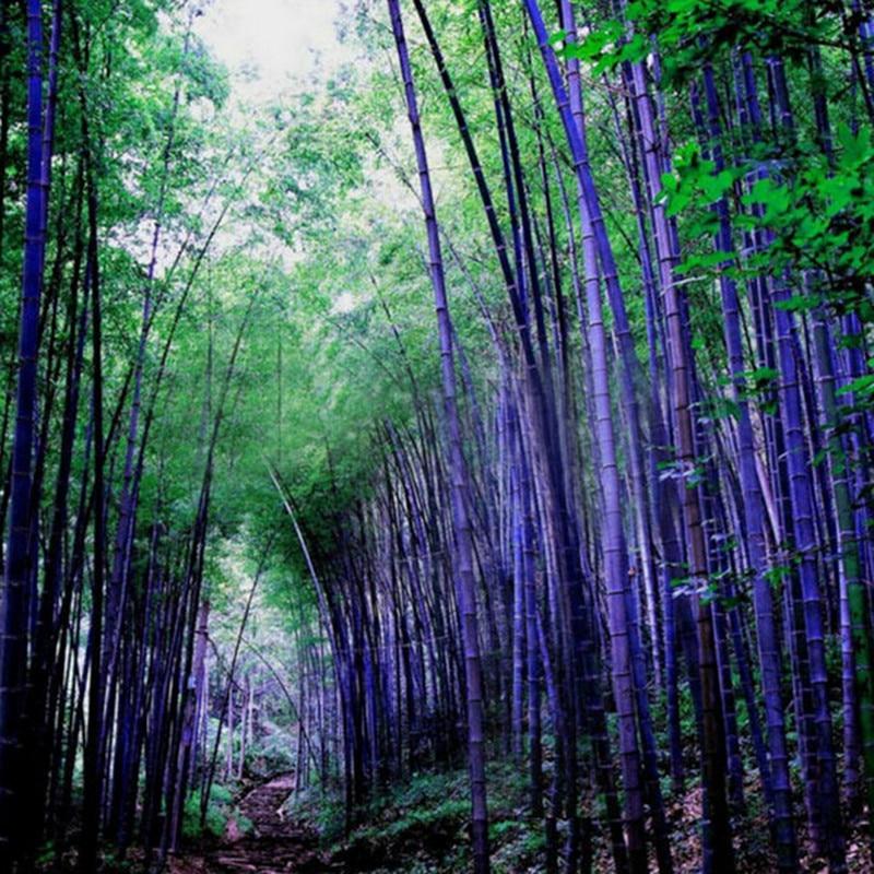 Bamboo garden aurora coupons : Whitening strips coupons walgreens