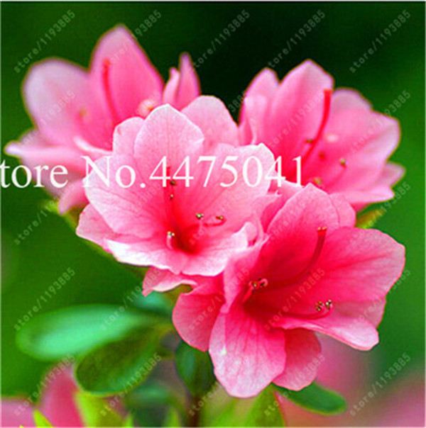 F197F2209B32A833146D64A861972676