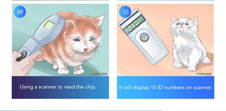 For kitten