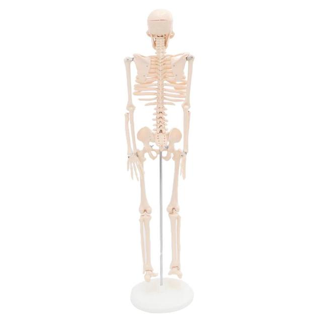 Fexible 45CM full size human Anatomical Anatomy Skeleton Model Medical Wholesale Retail  Poster Medical Learn Aid Anatomy