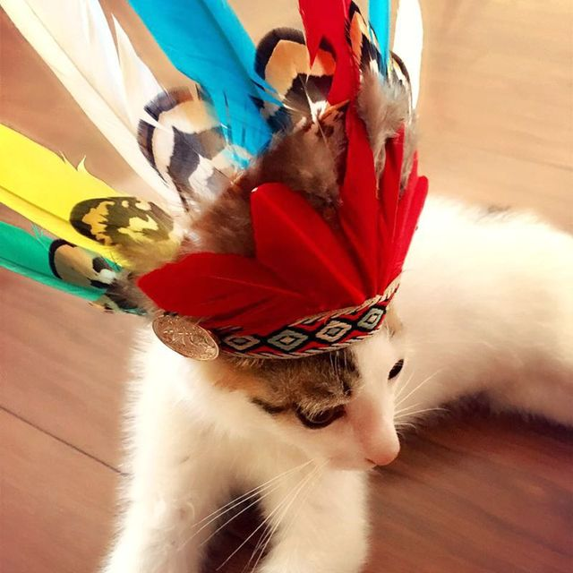 4b0e20f0a84 1 Piece Indian Style Feather Decoration Hat Adjustable Pet Dog Cap Small  Dog Halloween Costume Festival Party Decoration
