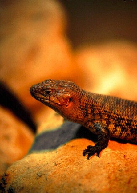 UVA UVB Reptile Pet Bulb 300W/E27/ULTRA VITALUX OSRAM Sun Solarium Lamp  Lizard