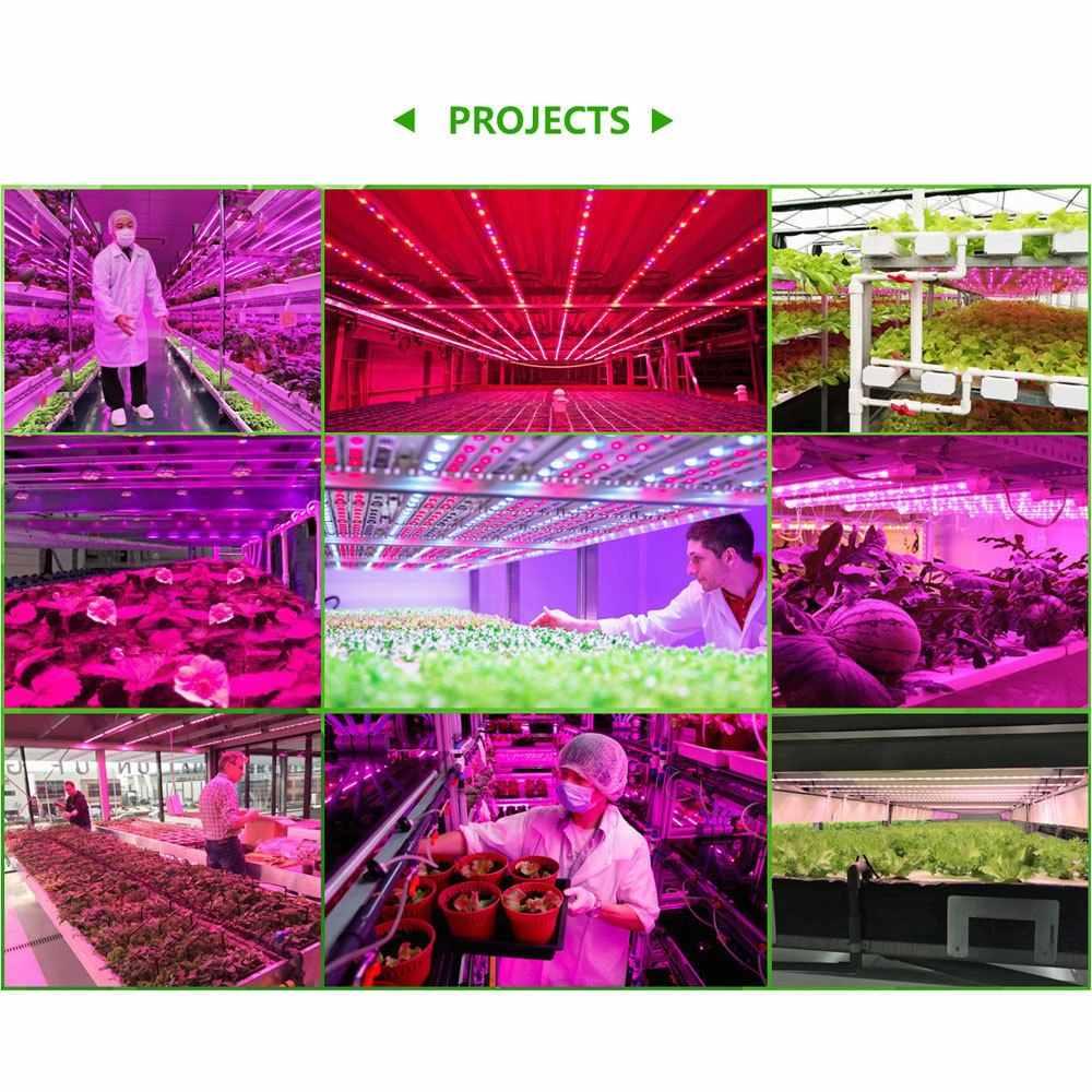 5050 LED Luci a intensità Impermeabile DC 12V Pianta Cresce Luce di Striscia del LED nastro Impostato con il Potere e Interruttore per Acquario serra