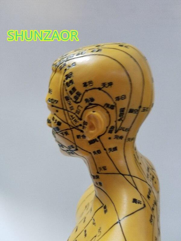 Ciência Médica modelo 50 cm educação médica Marca : Shunzaor