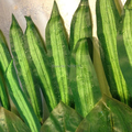50cm 20pcs Silk Party Artificial Brazil Bird Palm Evergreen Plant Tree Leaf Branch in Wedding Home Beach Decor Green