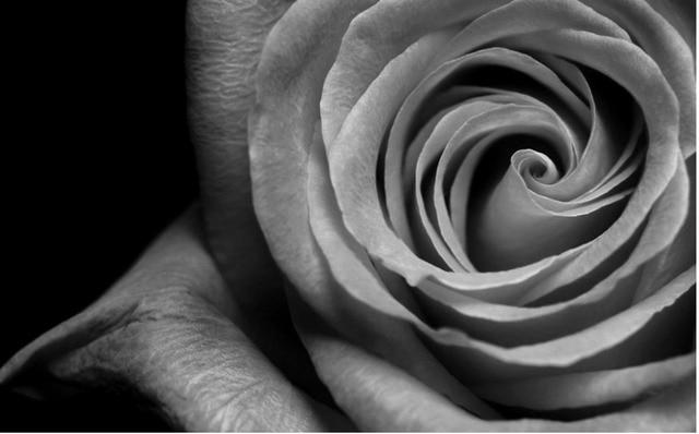 Papel Pintado En 3d Rosa Blanco Y Negro Papel Pintado Estereecopico