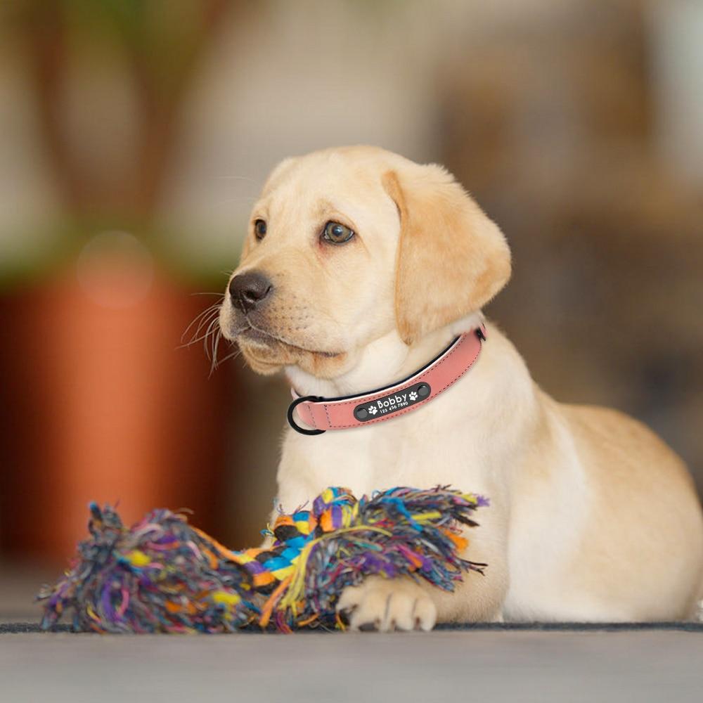 collier pour chien avec coordonnées