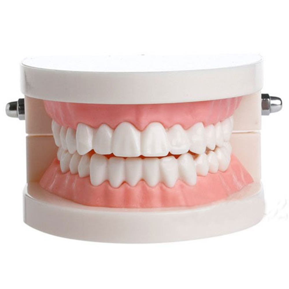 Dental Teaching Teeth Model For Child Caries Tooth Care Education Dentist Equipment Oral Care Health Care Tool For Kids Leaning