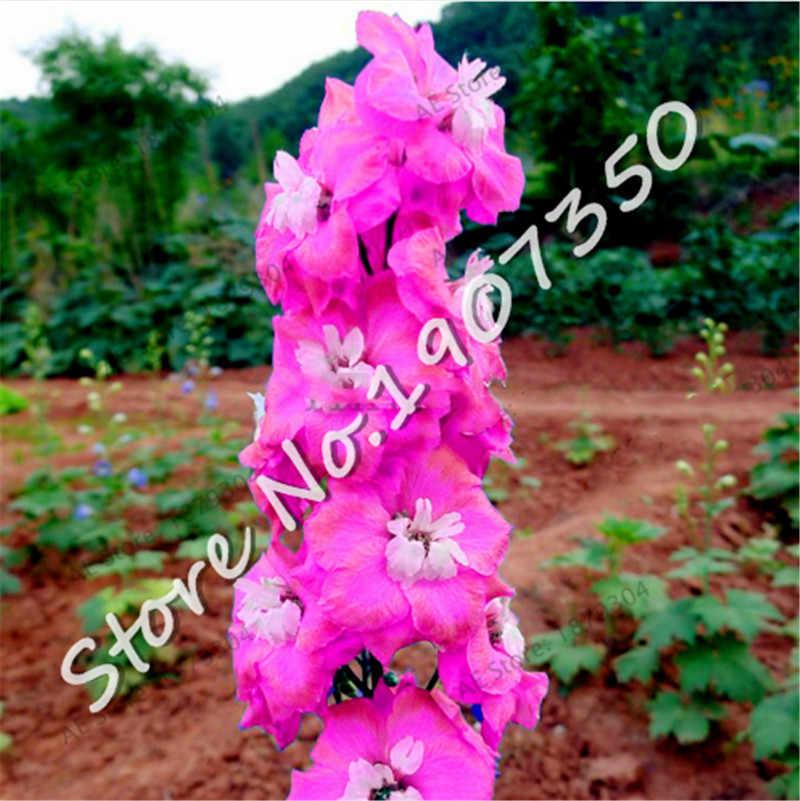 100 Pcs Colorido Bonsai Plante Delphinium Japão Belo Gigante Quarto Família Horta Orgânica Flores plantas Resistentes, fáceis de Crescer