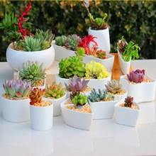 2019 Ceramic Flower Pots for Juicy Plants Small Bonsai