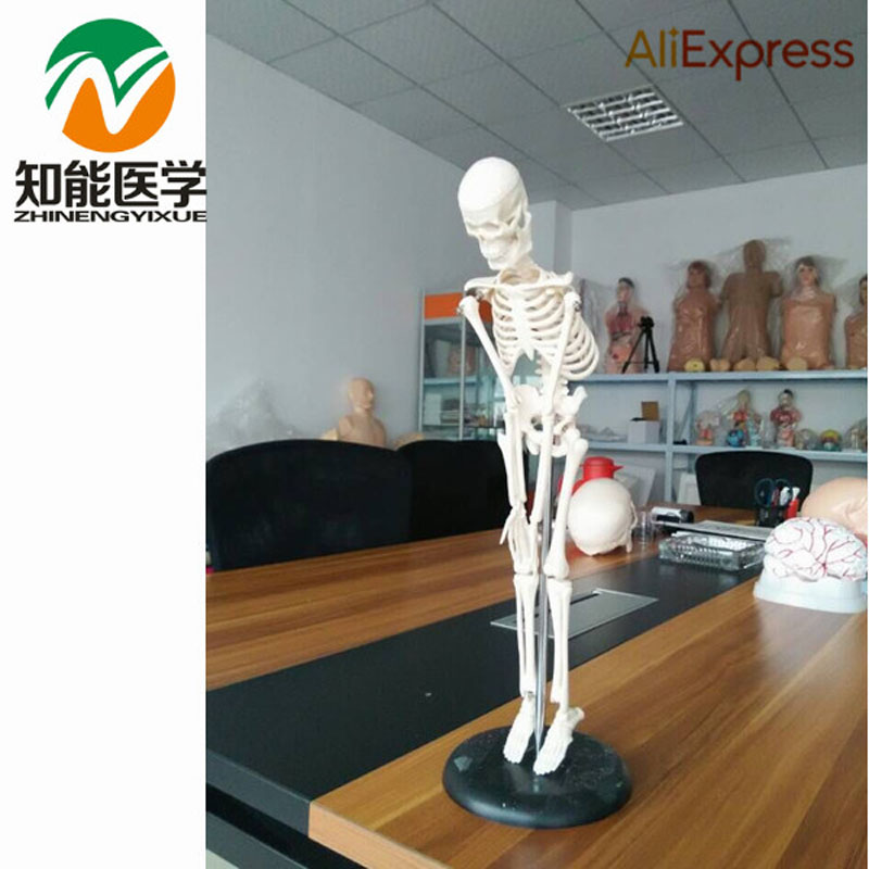 BIX-A1002 Human Skeleton Model(84cm)  W003 bix a1005 human skeleton model with heart and vessels model 85cm wbw394