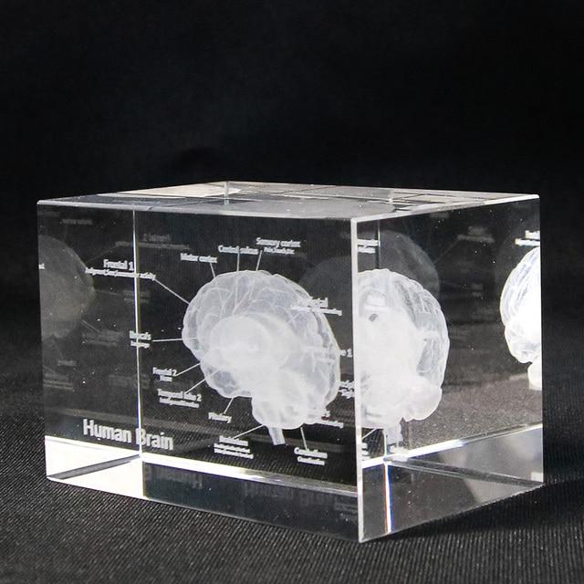 Glazen Kubus Met Foto.Us 19 99 Hersenen Diagram Crystal Cube 3d Human Anatomisch Model Kristal Glazen Kubus Anatomie Geest Neurologie Denken Medische Wetenschap