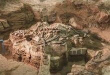 Fóssil de Dinossauro Laeacco Cena Criança Fotográfico Backdrops Para Estúdio de Fotografia Fotografia Fundos Digital Personalizado
