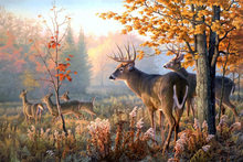 Canvas Painting deer horns family forest Landscape canvas art poster print Home decoration 23.5x35.5