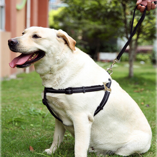high Reflections Pet Dog Chest Belt big Dog Chest Harness Long Retractable Leash Chest Belt NO_640x640 high reflections pet dog chest belt , big dog chest harness long