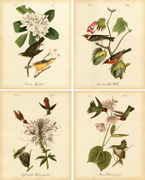 Audubon S Famous Flowers And Birds Pictures 4 Panel Vintage Unframed Hanging Paintings For Home Coffee