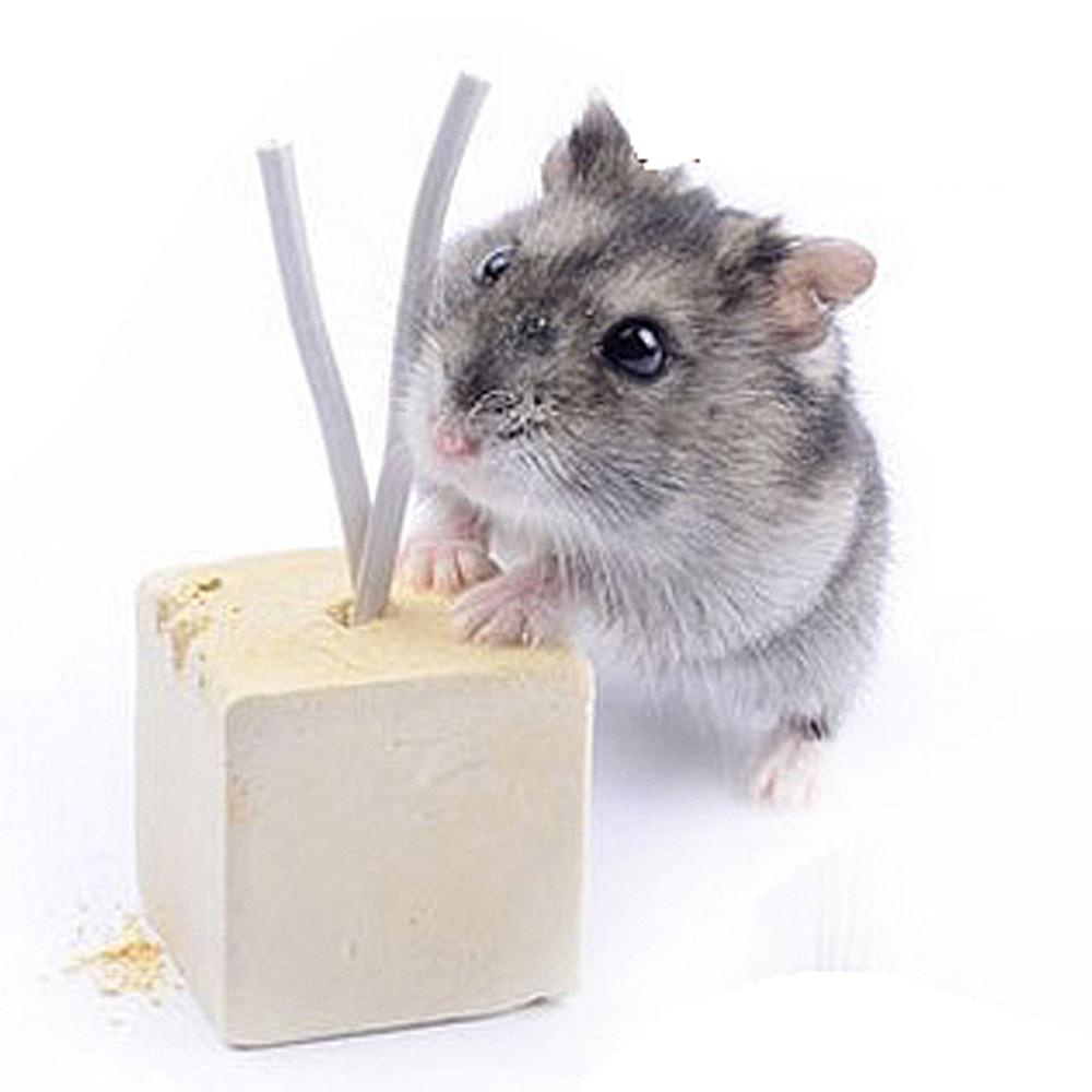 5x fruit chew toy hamster rat chinchilla rabbit teeth grinding mineral stone SKU