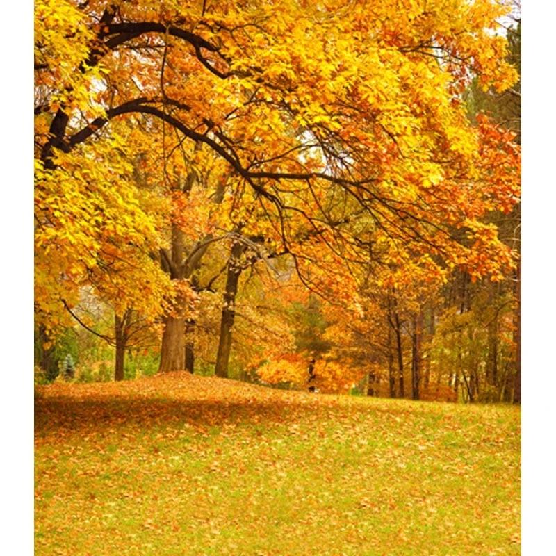Musim Gugur Pemandangan Vinyl Kain Jatuh Daun Hutan Fotografi Latar Belakang Untuk Bayi Yang Baru Lahir Foto Pernikahan Studio Potret Latar Belakang Photography Backdrops Forest Photography Backdropsforest Photography Aliexpress