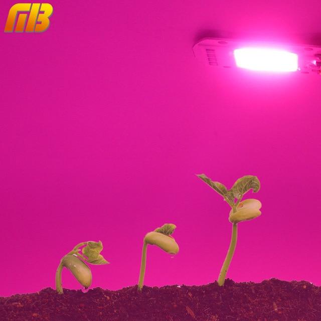 Светодиодный чип COB для выращивания растений с полным спектром света 220 в 110 В 20 Вт 30 Вт 50 Вт для выращивания растений внутри помещений и освещения роста цветов