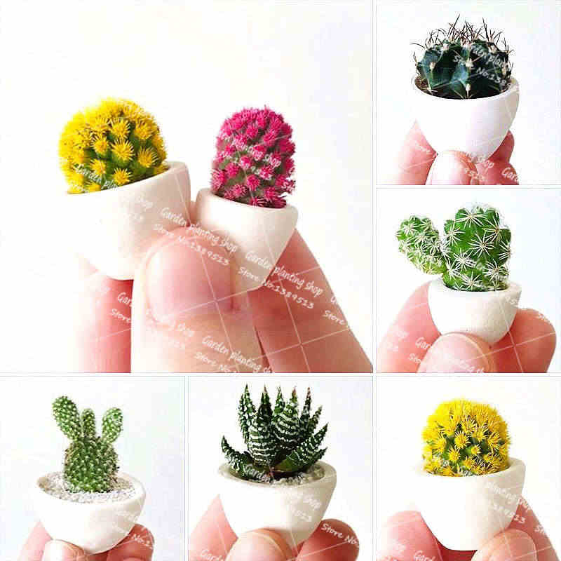 30Pcs/Bag Mini Cactus Bonsai Plant Garden Flower Plant Potted Family Decoration Plant Flower Rare Succulent Potted Planting