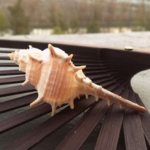 HappyKiss 1pcs/lo 7-9cm Natural Shell toys seashells  natural crafts natual big conch party fish tank to decorate