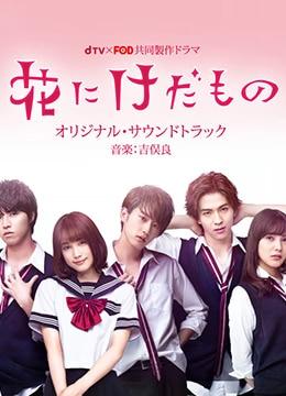 《花予野兽》2017年日本爱情电视剧在线观看
