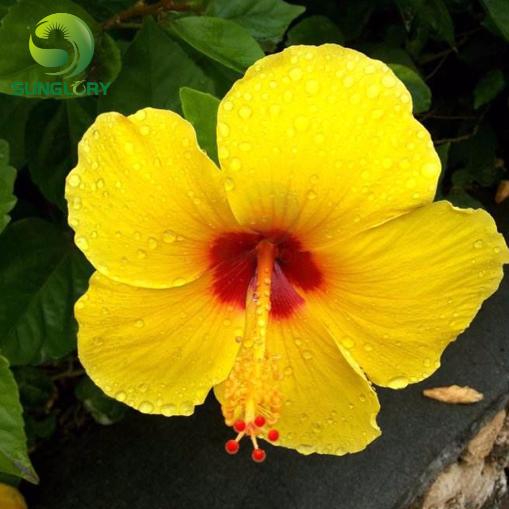 3pcs Hawaiian Flower Set Cookie Cutter Plastic Fondant Cookie Mold