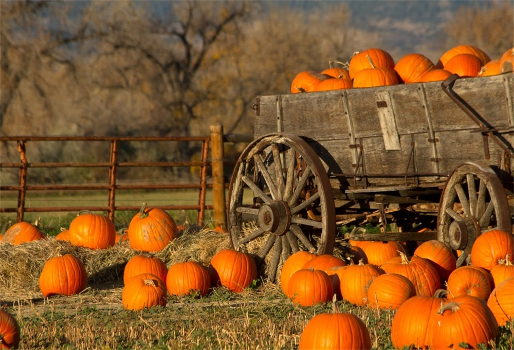 Laeacco Farm Hay Bale Cart Pumpkin Scene Thanksgiving Photographic Backgrounds Customized Photography Backdrops For Photo Studio