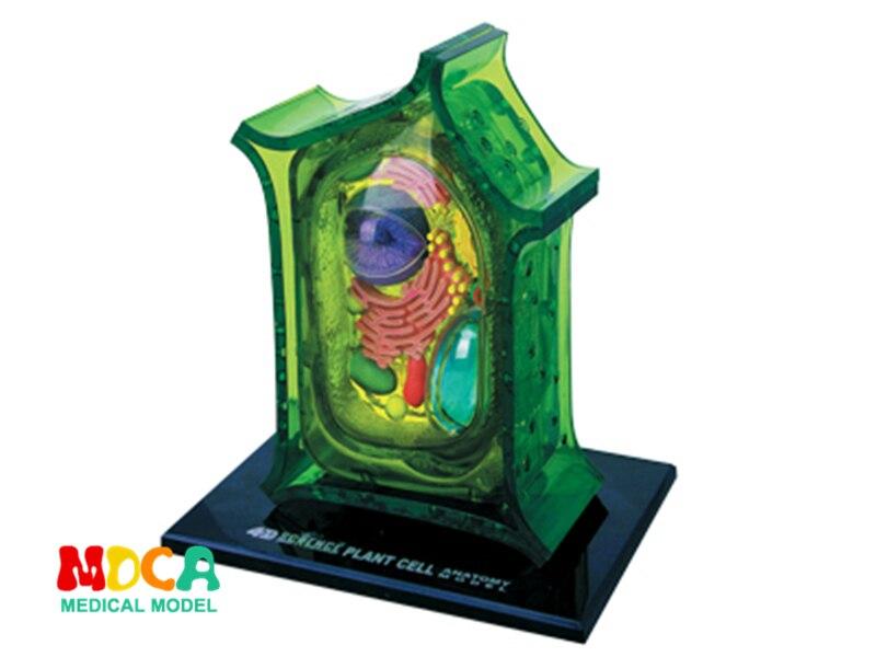 โรงงานโทรศัพท์มือถือ 4d master ปริศนาประกอบของเล่น human body อวัยวะ anatomical model การสอนการแพทย์ชุด-ใน วิทยาศาสตร์การแพทย์ จาก อุปกรณ์ออฟฟิศและการเรียน บน AliExpress - 11.11_สิบเอ็ด สิบเอ็ดวันคนโสด 1