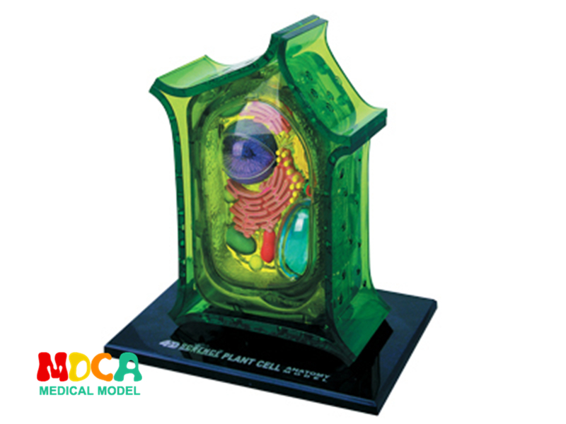 Plant cell 4d master puzzle Assembling toy human body organ anatomical model medical teaching model organ anatomical model teaching medical human body specimen model human lung anatomical model 4 parts gasencx 0055
