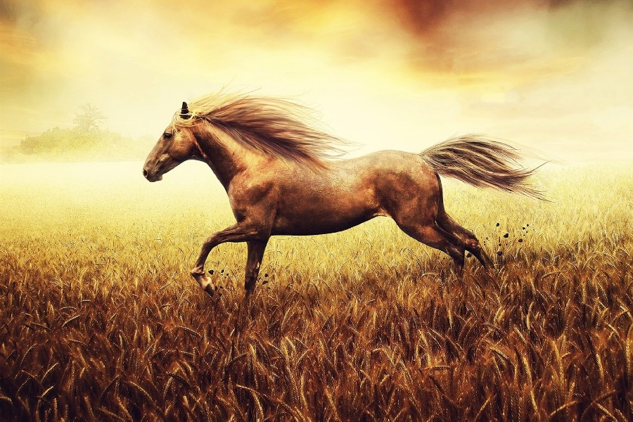 Diy Frame Animals Fantasy Art Horses Dig Animal Poster Hd