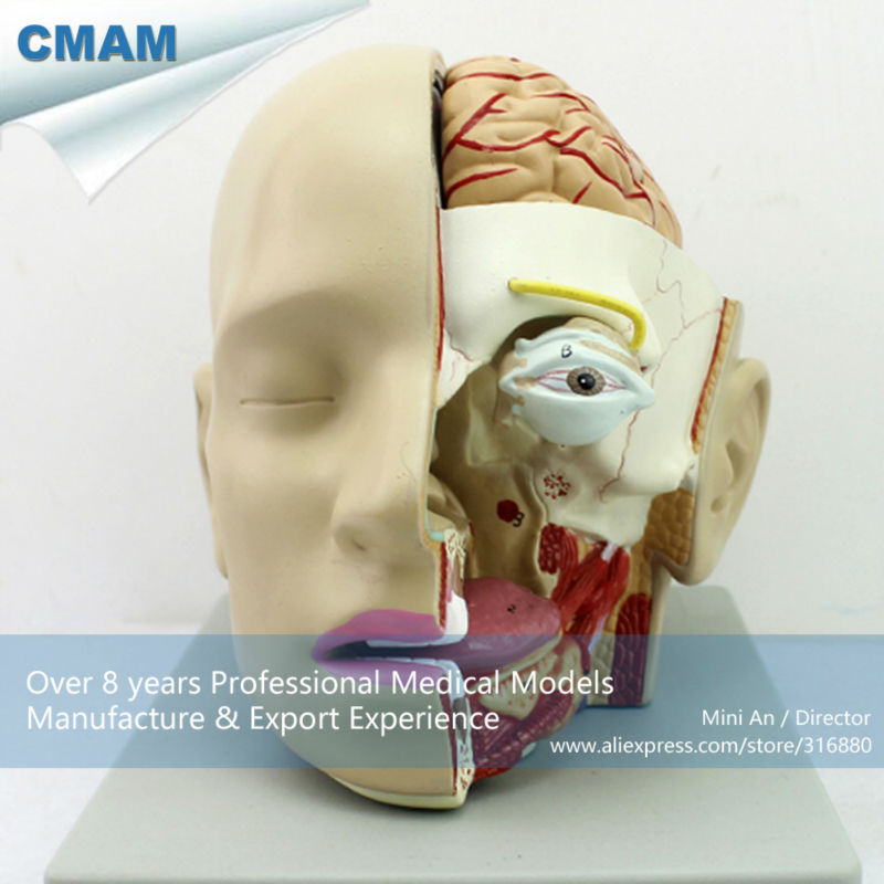 CMAM-BRAIN04 Section of Head with Brain, 4-Parts, Anatomy Models > Brain Models amburanjan santra rakesh kumar and c s bal evaluation of brain tumor recurrence role of pet spect mr