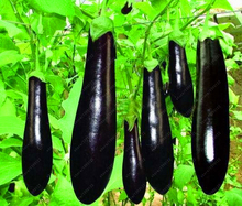 Hot Sale! 100 pcs/Bag delicious Purple Eggplant Seeds Vegetable seeds Non-GMO bonsai plants for home garden