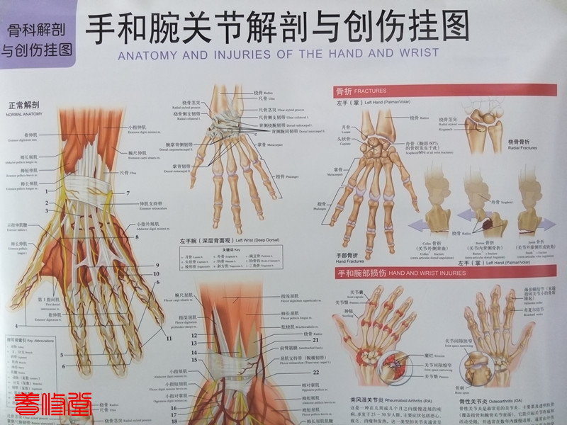 Atemberaubend Massage Anatomie Chart Ideen - Anatomie Ideen ...
