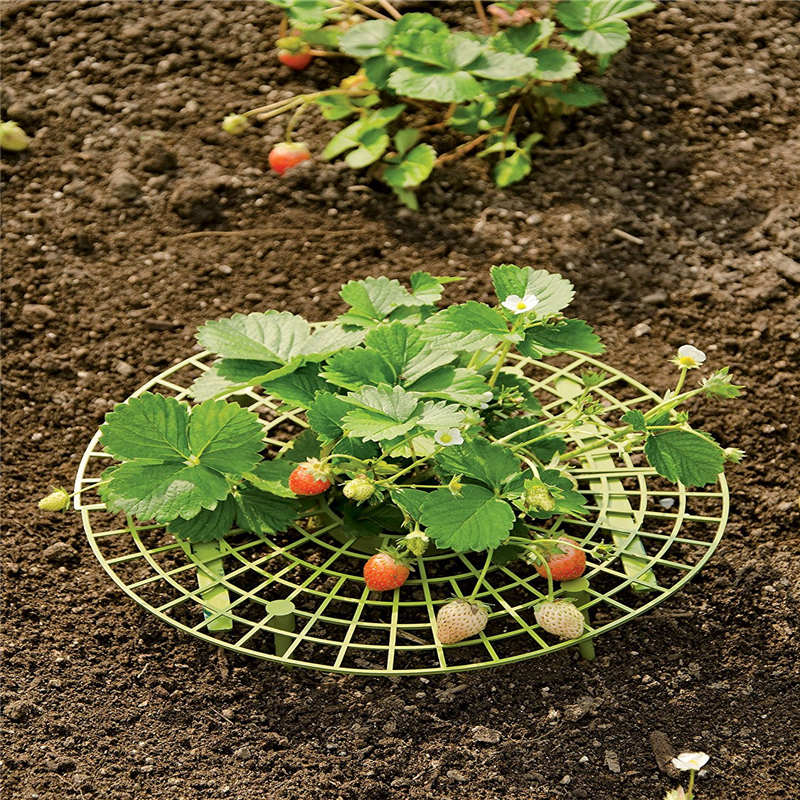 Handy strawberry supports for your garden,keep strawberries off rot in the rainy days random Color