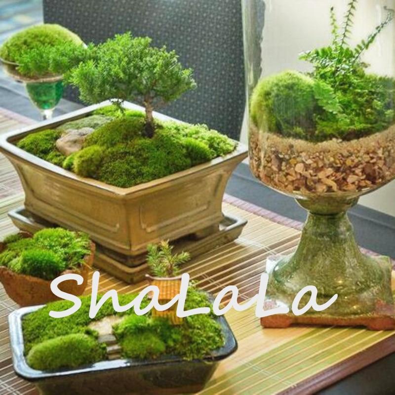 яванский мох живой доставка из Китая