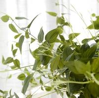 11 מזלג לקורה של כסף עלים גפן מלאכותי פסיפס ירוק עלווה עם קיר צמח DIY