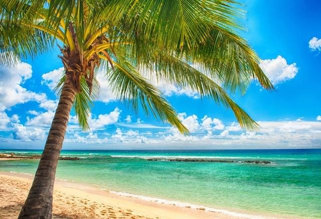 Laeacco Sunny Cloudy Sky Sea Beach Palm Tree Landscape Photography Backgrounds Vinyl Custom Camera Backdrops For