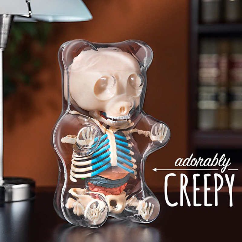 Science Toys 4DMASTER Anatomy Model Perspective Bear Skeleton Anime Action Figures Adults  Kids Toys Gifts Medicine Animal Model jason freeny balloon dog jelly bear perspective anatomical skeleton model 4 dmaster novelty toys creative gifts