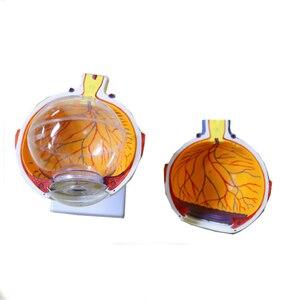 Image 4 - 6 lần Con Người Mắt Mô Hình Giải Phẫu TAI MŨI HỌNG Nhãn Khoa Nhãn Cầu cơ cấu nội bộ Giác Mạc iris ống kính thủy tinh