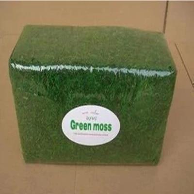 тегін жеткізу Табиғи өсімдік шөп Moss кептірілген Жасыл мүк, ұялы безендіру 500gsm