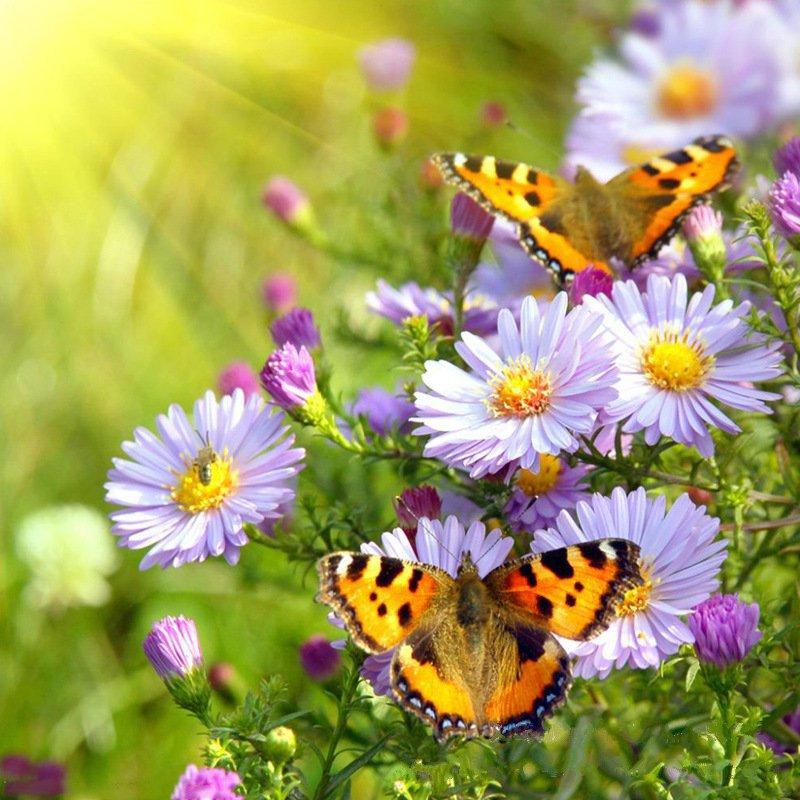 Diy 3d Blumen Pflanzen Malvorlagen Malen Nach Zahlen Olgemalde