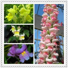 200pcs/bag Snapdragon Seeds Bonsai Balcony Flower Potted Seeds DIY Home Garden