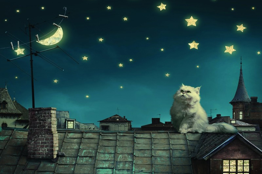 Cat on a Roof Night Stars in the Sky Mural Rolls 3D Wall Paper for Livingroom Photo Painting fashion Household