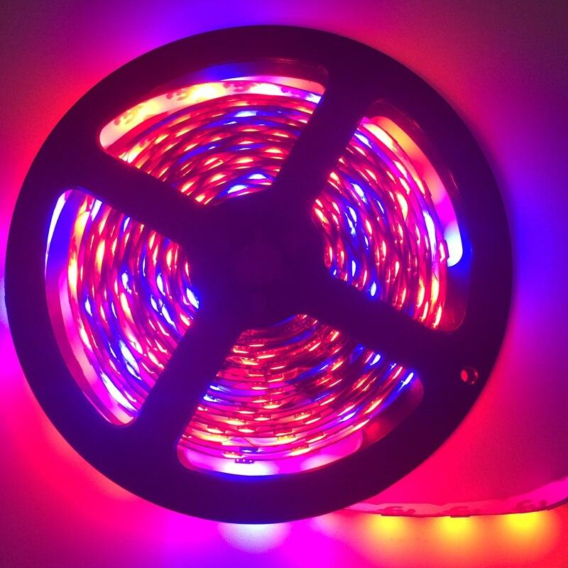 LED բույսերի աճող լույս 5050 LED ճկուն - Մասնագիտական լուսավորություն - Լուսանկար 5