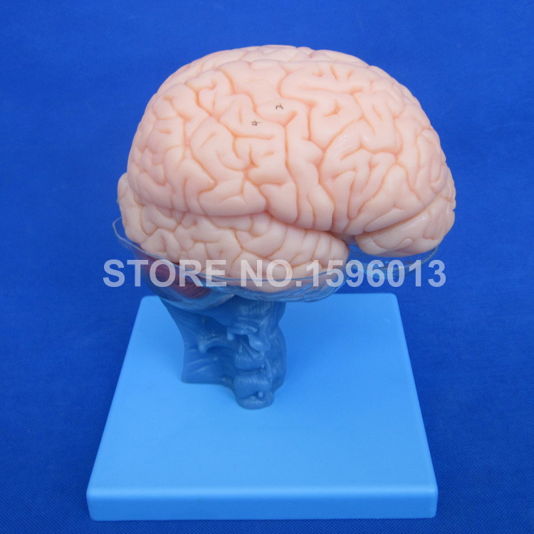 Science discount WBW007 (Female)