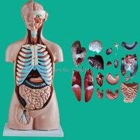 HOT 85CM Sexless Torso With Internal Organs 20 Parts Human Sexless Torso Model