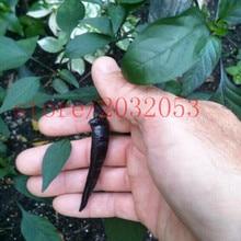 100 Hot Black Cobra Peppers,Chili seeds .Rare NO-GMO vegetable seeds for home garden planting