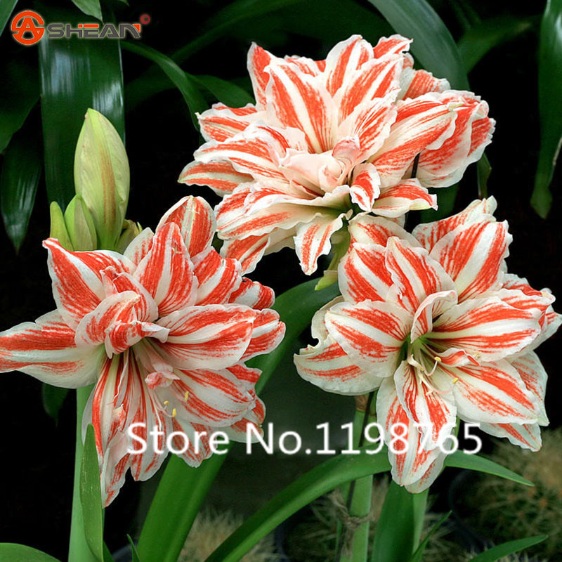popular orange annual flowersbuy cheap orange annual flowers lots, Beautiful flower