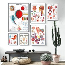 Human Organs Anatomy Chart Posters And Prints Canvas Art Decorative Wall Pictures For Living Room Home Decor Unframed Painting human body anatomy chart wall art canvas painting poster for home decor posters and prints unframed decorative pictures